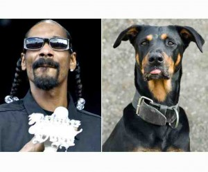 snoop dogg look like 300x249 Exprimer une impression en anglais   look, sound, smell, feel, taste