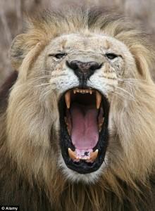 Vocabulaire anglais – Corps, mouvements et cris des animaux