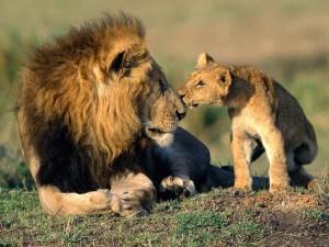 animaux sauvages vocabulaire anglais