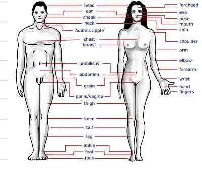 Corps humain – Human body – Vocabulaire anglais