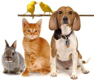Vocabulaire anglais – Les animaux de compagnie en anglais : Pets