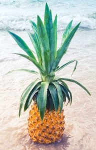 Ananas exotique plage